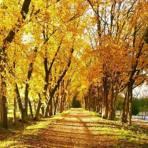 Autumn_Trail_2014